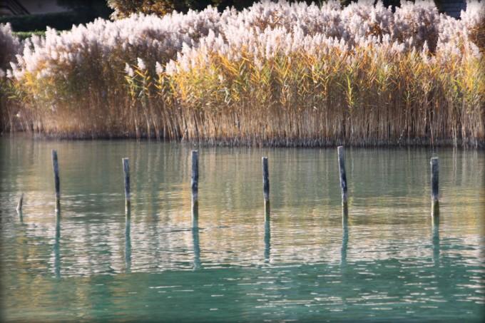 Roselière des Seines à Sevrier